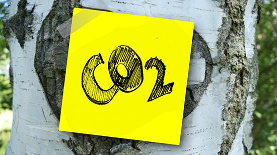 Bäume gegen CO2 Emissionen