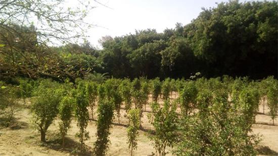Gepflänzte Bäume als Aktion für nachhaltigeren Tourismus von ETI