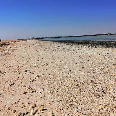 ETI Strand Säuberung von Plastik in Ägypten